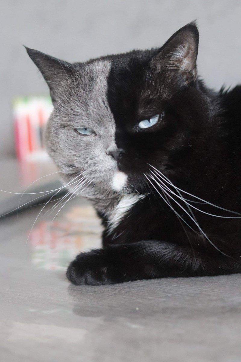Katze Mit Zwei Gesichtern
