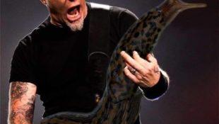 Gitarrensolo mit einer riesen Nacktschnecke