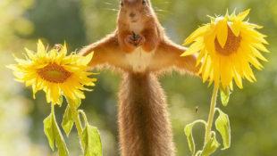 Süße Tiere: So haben Sie Eichhörnchen noch nie gesehen