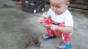 Ein 3-jähriges Kleinkind füttert seine Vögel: Ein Video, das Millionen von Menschen berührt hat