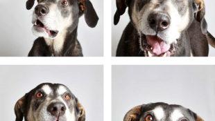 Portraits im Fotoautomaten: Diese niedlichen Fotos sollen Hunden im Tierheim zur Adoption verhelfen